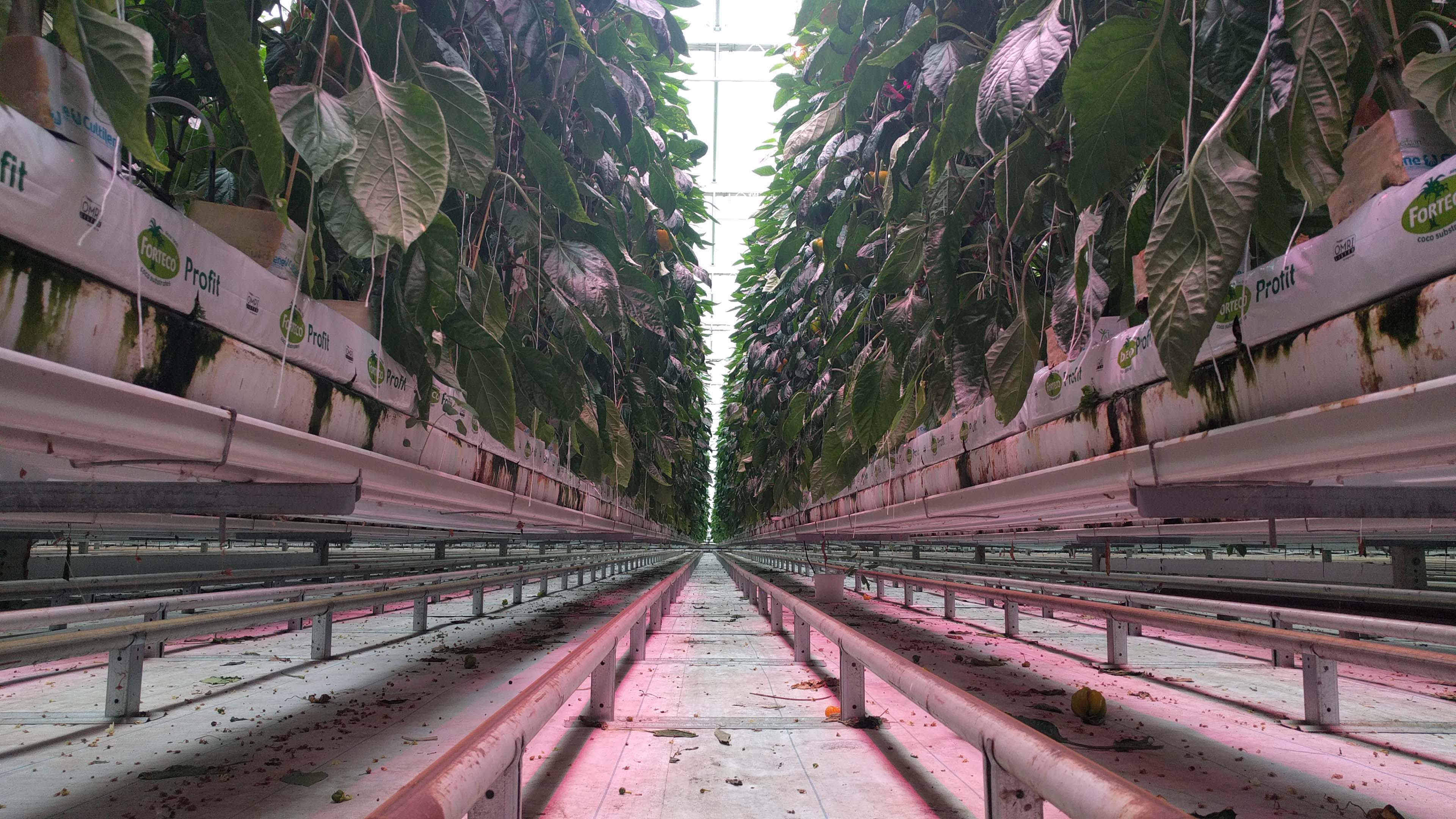 Hydroponic growing lines
